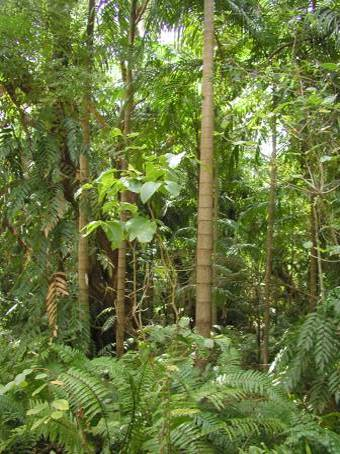 Tag 15 der nordaustralien reise for Boden im regenwald